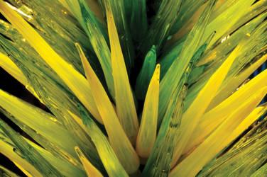 Glass Spears by Robert-Hartland
