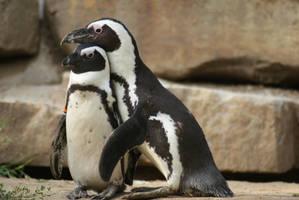 Penguin friends by saiquarx