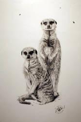 meerkats 2 by abearoriginal