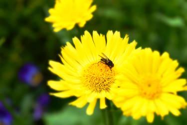 Fly On A Sunflower by BinaryReflex