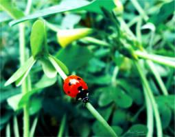 LadyBug . . by Angel--Spirit