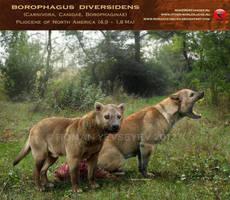 Borophagus diversidens by RomanYevseyev