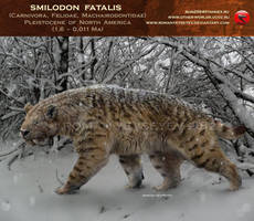 Smilodon fatalis (winter smilo2) by RomanYevseyev