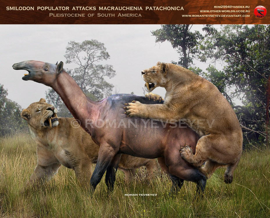 Smilodon populator attacks Macrauchenia by RomanYevseyev