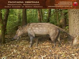 Pachyaena ossifraga by RomanYevseyev
