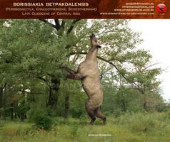 Borissiakia feeds by RomanYevseyev