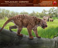 Thylacoleo carnifex by RomanYevseyev
