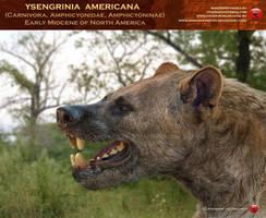Ysengrinia americana head by RomanYevseyev