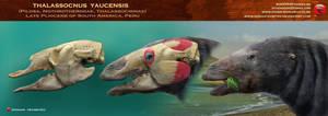 Thalassocnus yaucensis head restoration by RomanYevseyev