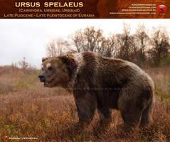 Ursus spelaeus by RomanYevseyev