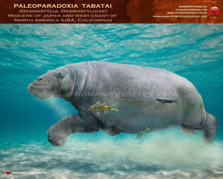 Paleoparadoxia tabatai by RomanYevseyev