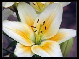 Flowers 4 by niclake13