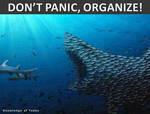 Organize by uki--uki