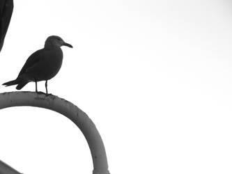 LBeach Stock 2: Serene Bird by Dyl-Rob