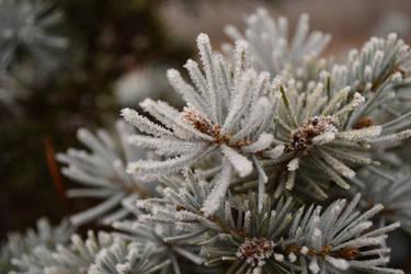 Winter 2 by alexnica