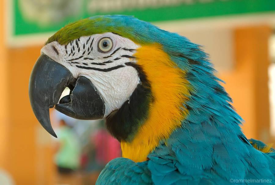 ebzzry's Profile Picture