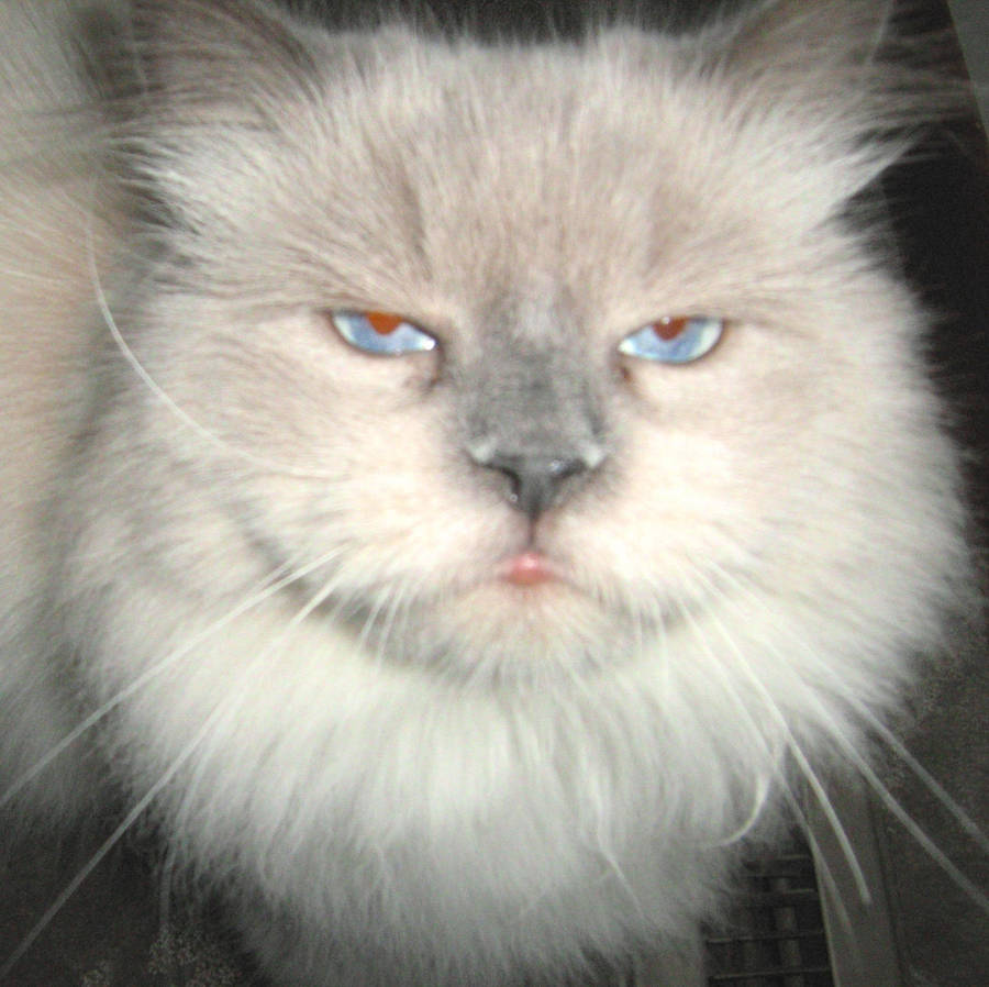 KootiesMom's Profile Picture