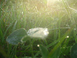 A Slant of Morning by skeptomaniacs