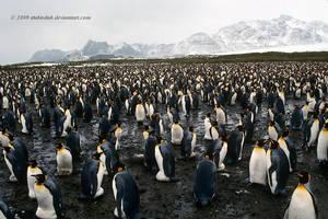 Sea of Penguins by stubirdnb