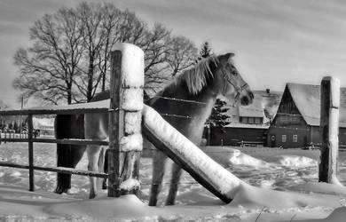 Horse by Schneeengel