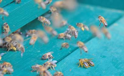 Bees by Schneeengel
