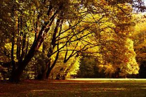 golden days by interiornoise