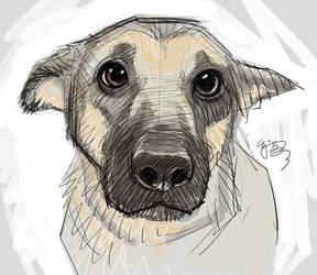 Puppy-eyes by EJ-Su