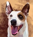Pet Portrait: Gordo by RipfangDragon