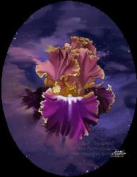 [C] Iris by RipfangDragon