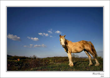 A horse with no name... by Michel-Lag-Chavarria