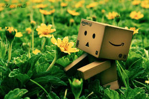 My Danbo, my love by azmeem
