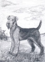 Airedale terrier by IPPO-Lita
