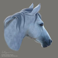 Equus by fishtankbabe