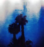 Kodak Palm Trees by fishtankbabe