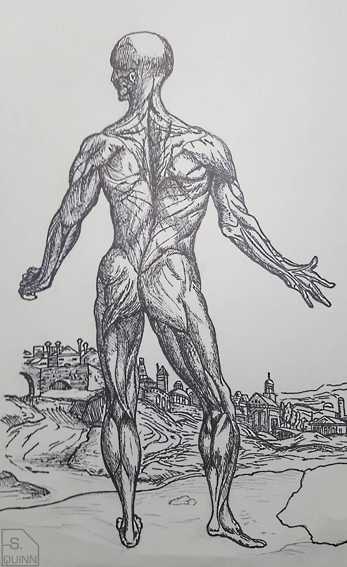 Andreas Vesalius Muscle Man Recreation By Firestrike2 On Deviantart
