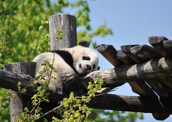 Litte big Panda Fu Hu by lavimon