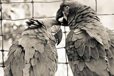 Love birds by Tragic-Destiny