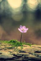 Springtime... by Mark-Heather