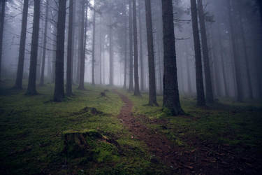 creepy forest by Mark-Heather