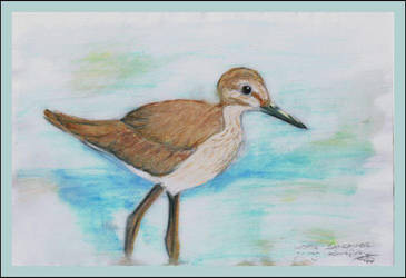 Wood Sandpiper by chaded