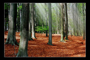 Woodland by Dajiro