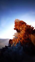 Desert Rose by sentimentalfreak