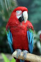Green Wing Macaw 2 by MegMarcinkus