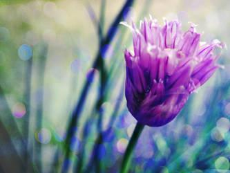 . Flower III by PetitJeReve