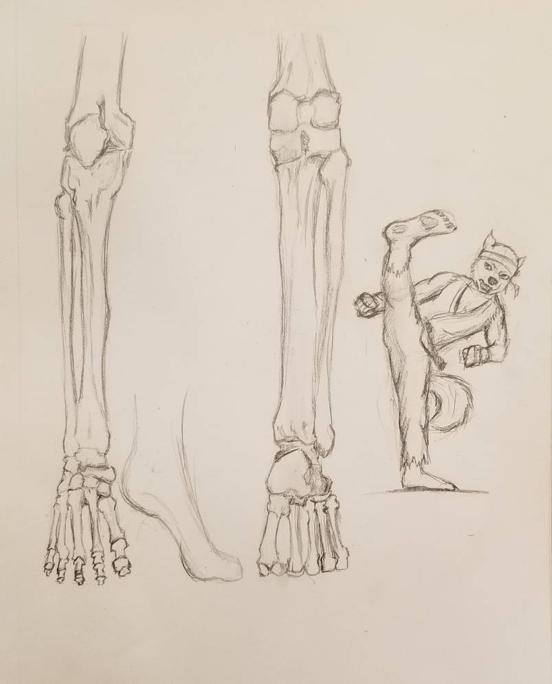 Anatomy series (7) by Tikaaniwicker4