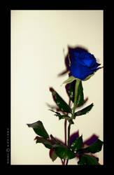 Blue rose... by xaninha