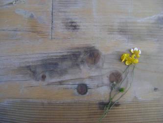 Little flower by RevarIsave