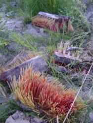 Rural corals by RevarIsave