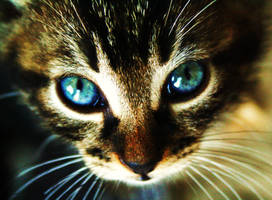 cat 7 by deejaymiky91