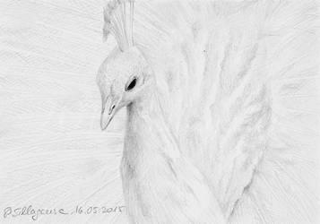 #004: albino peacock by Sillageuse